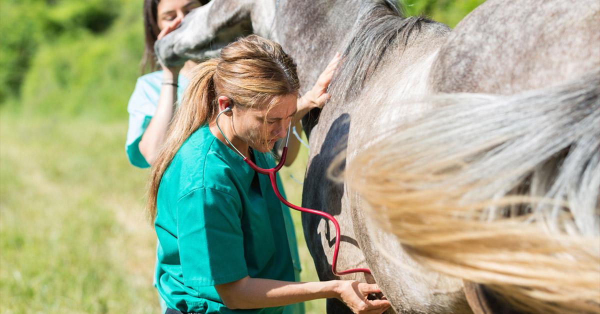 iVette: la nuova app per i medici veterinari